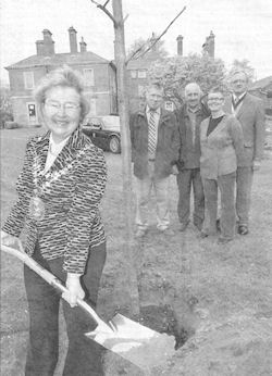 Sadie Smith planting a tree. Courtesy of the Express and Star